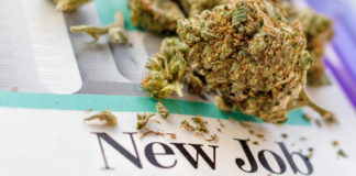"Cannabis up close with words ""New Job"""