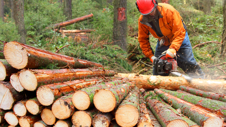 Back to Work: Check out these opportunities in logging, logistics, and tech